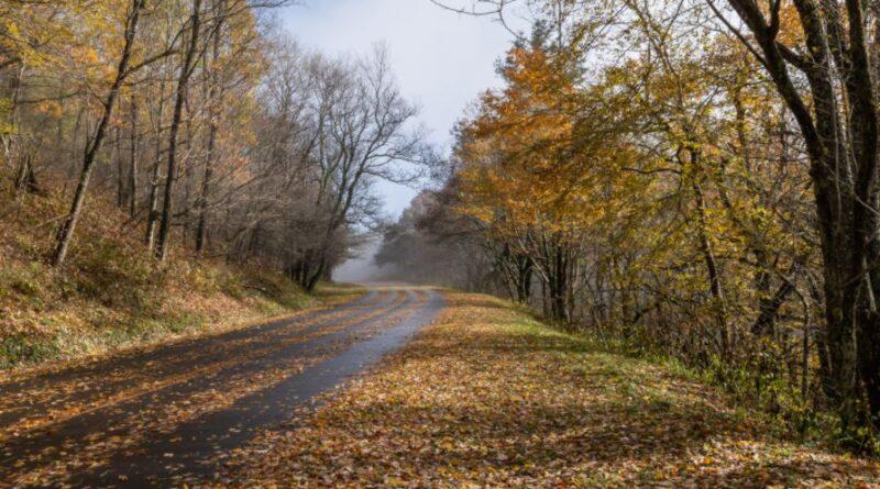 Besondere Vorsicht geboten: Rutschige Fahrbahn durch nasses Laub im Herbst