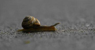 Eine Schnecke kriecht auf einer Straße