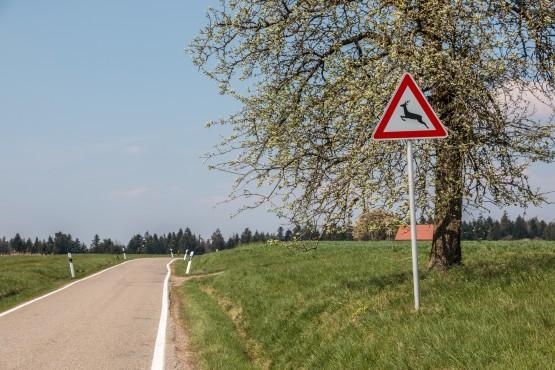 Achtung Wildwechsel: zwischen Feldern queren oft Wildtiere die Straße